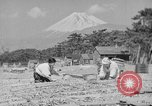 Image of Japanese people Japan, 1943, second 46 stock footage video 65675051699