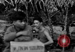 Image of L-5 Piper Cub plane Palawan Philippines, 1945, second 6 stock footage video 65675052255