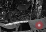 Image of L-5 Piper Cub plane Palawan Philippines, 1945, second 11 stock footage video 65675052255