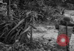 Image of L-5 Piper Cub plane Palawan Philippines, 1945, second 20 stock footage video 65675052255