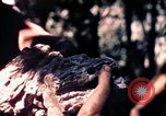 Image of United States 25th Infantry Division Vietnam, 1967, second 32 stock footage video 65675052325