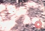 Image of United States 25th Infantry Division Vietnam, 1967, second 37 stock footage video 65675052325
