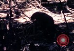 Image of United States 25th Infantry Division Vietnam, 1967, second 43 stock footage video 65675052325
