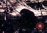 Image of United States 25th Infantry Division Vietnam, 1967, second 44 stock footage video 65675052325