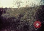 Image of 25th Infantry Division troops Vietnam, 1967, second 44 stock footage video 65675052329