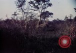 Image of 25th Infantry Division troops Vietnam, 1967, second 59 stock footage video 65675052329