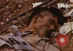 Image of United States troops Saigon Vietnam, 1968, second 40 stock footage video 65675052376
