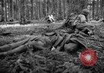 Image of Japanese-American 442nd Infantry Vosges Mountains France, 1944, second 20 stock footage video 65675052439