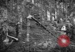 Image of Japanese-American 442nd Infantry Vosges Mountains France, 1944, second 44 stock footage video 65675052439