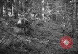 Image of Japanese-American 442nd Infantry Vosges Mountains France, 1944, second 46 stock footage video 65675052439