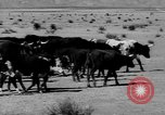 Image of cowboys on ranch United States USA, 1940, second 12 stock footage video 65675052587