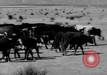 Image of cowboys on ranch United States USA, 1940, second 13 stock footage video 65675052587