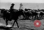 Image of cowboys on ranch United States USA, 1940, second 23 stock footage video 65675052587