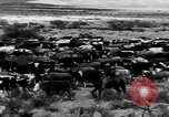 Image of cowboys on ranch United States USA, 1940, second 37 stock footage video 65675052587