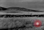 Image of cowboys on ranch United States USA, 1940, second 39 stock footage video 65675052587