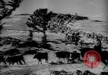 Image of cowboys on ranch United States USA, 1940, second 48 stock footage video 65675052587