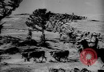 Image of cowboys on ranch United States USA, 1940, second 50 stock footage video 65675052587