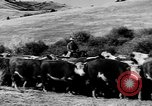 Image of cowboys on ranch United States USA, 1940, second 53 stock footage video 65675052587