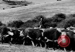 Image of cowboys on ranch United States USA, 1940, second 54 stock footage video 65675052587