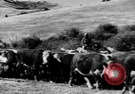 Image of cowboys on ranch United States USA, 1940, second 55 stock footage video 65675052587