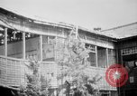 Image of Japanese patients Hiroshima Japan, 1945, second 32 stock footage video 65675052711