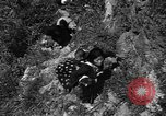 Image of 32nd Infantry 7th Division Okinawa Ryukyu Islands, 1945, second 16 stock footage video 65675052969
