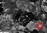 Image of 32nd Infantry 7th Division Okinawa Ryukyu Islands, 1945, second 20 stock footage video 65675052969