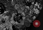 Image of 32nd Infantry 7th Division Okinawa Ryukyu Islands, 1945, second 42 stock footage video 65675052969