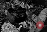 Image of 32nd Infantry 7th Division Okinawa Ryukyu Islands, 1945, second 50 stock footage video 65675052969