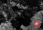 Image of 32nd Infantry 7th Division Okinawa Ryukyu Islands, 1945, second 52 stock footage video 65675052969