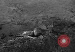 Image of 32nd Infantry 7th Division Okinawa Ryukyu Islands, 1945, second 25 stock footage video 65675052972