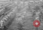 Image of 339th Infantry of American Expedition Forces Archangel Russia, 1919, second 31 stock footage video 65675053047