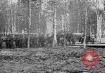 Image of American 339th Infantry Regiment Archangel Russia, 1918, second 32 stock footage video 65675053049