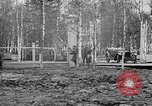 Image of American 339th Infantry Regiment Archangel Russia, 1918, second 38 stock footage video 65675053049