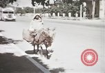 Image of Animal economy Morocco North Africa, 1944, second 21 stock footage video 65675053172
