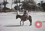 Image of Animal economy Morocco North Africa, 1944, second 61 stock footage video 65675053172