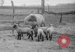 Image of quintuplet lambs Wilmington Ohio USA, 1936, second 4 stock footage video 65675053233