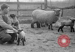 Image of quintuplet lambs Wilmington Ohio USA, 1936, second 16 stock footage video 65675053233