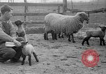 Image of quintuplet lambs Wilmington Ohio USA, 1936, second 17 stock footage video 65675053233