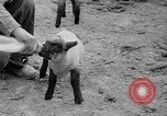 Image of quintuplet lambs Wilmington Ohio USA, 1936, second 18 stock footage video 65675053233