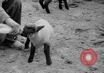 Image of quintuplet lambs Wilmington Ohio USA, 1936, second 19 stock footage video 65675053233