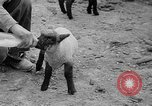 Image of quintuplet lambs Wilmington Ohio USA, 1936, second 20 stock footage video 65675053233