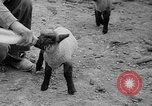 Image of quintuplet lambs Wilmington Ohio USA, 1936, second 21 stock footage video 65675053233