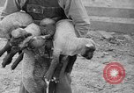Image of quintuplet lambs Wilmington Ohio USA, 1936, second 23 stock footage video 65675053233