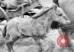 Image of German troops Russian Front, 1941, second 35 stock footage video 65675053417