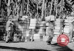Image of Troops load supplies on Higgins Boats Solomon Islands, 1944, second 42 stock footage video 65675053483