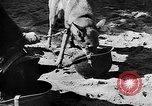 Image of United States troops Burma, 1944, second 54 stock footage video 65675053490