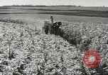 Image of agriculture activities United States USA, 1945, second 6 stock footage video 65675058167