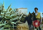 Image of Farmers using animals for transportation Europe, 1950, second 21 stock footage video 65675060860