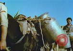 Image of Farmers using animals for transportation Europe, 1950, second 25 stock footage video 65675060860